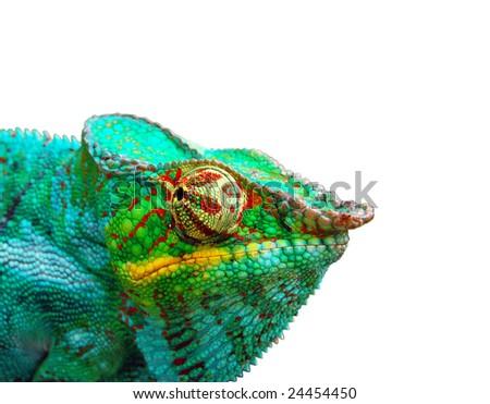 Chameleon over white background - Shutterstock ID 24454450