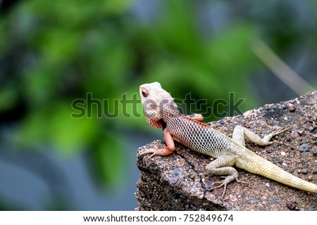 Chameleon roaming freely and enjoying nature #752849674
