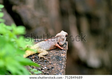 Chameleon roaming freely and enjoying nature #752849689