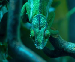 Chameleon runs on a branch
