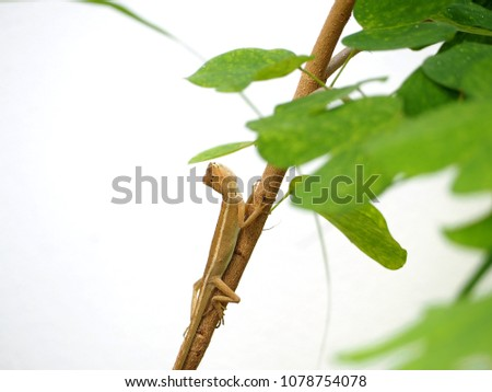 chameleon sitting on a tree branch in nature #1078754078