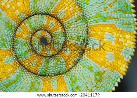 Stock Photo Chameleon Tail Spiral