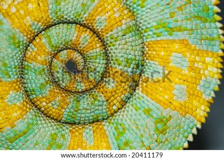 Stock Photo Chameleon Tail Spiral