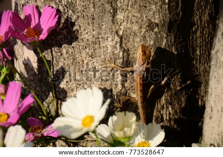 Chameleon with beautiful flowers. Brown Chameleon in the flower garden. #773528647