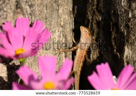 Chameleon with beautiful flowers. Brown Chameleon in the flower garden. #773528659