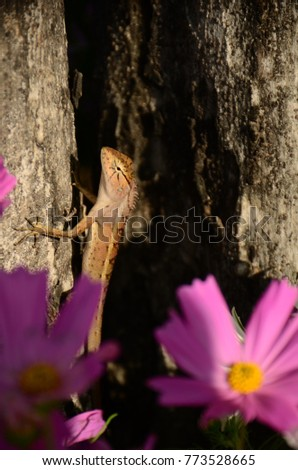 Chameleon with beautiful flowers. Brown Chameleon in the flower garden. #773528665