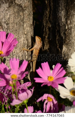 Chameleon with beautiful flowers. Brown Chameleon in the flower garden. #774167065
