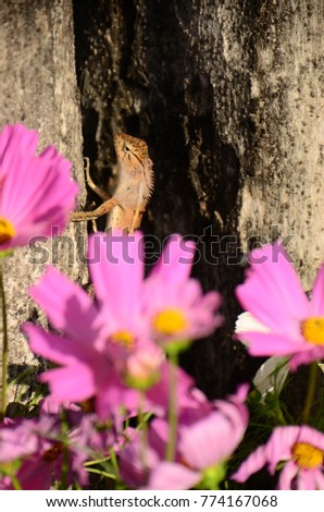 Chameleon with beautiful flowers. Brown Chameleon in the flower garden. #774167068
