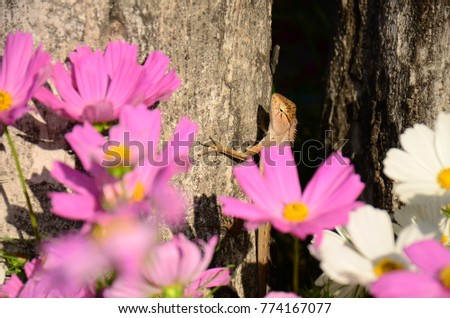 Chameleon with beautiful flowers. Brown Chameleon in the flower garden. #774167077