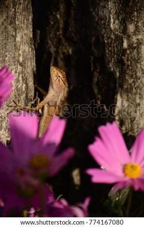 Chameleon with beautiful flowers. Brown Chameleon in the flower garden. #774167080
