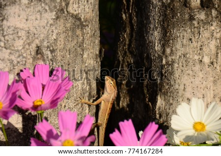 Chameleon with beautiful flowers. Brown Chameleon in the flower garden. #774167284