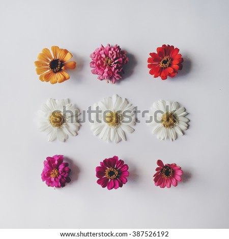 Chamomile and other flowers at white background. Flat lay, top view
