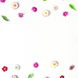 Chamomile buds, leaves, petals on white background. Flat lay, top view