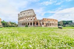 Chamomile field at Piazza di Santa Francesca Romana and Great Roman Colosseum ( Coliseum, Colosseo ), also known as Flavian Amphitheatre. Famous world landmark. Scenic landscape. Rome. Italy. Europe.