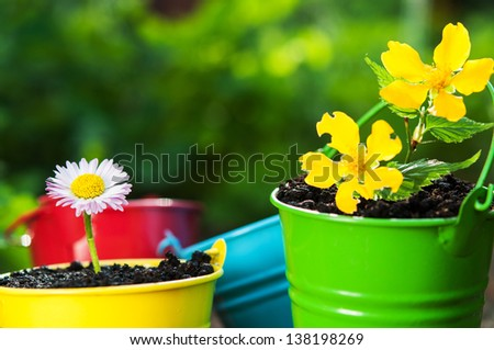 chamomile flower on a green grass background
