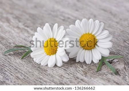 Chamomile flower on wooden background
