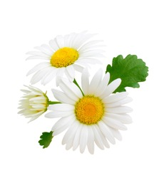 Chamomile flowers composition isolated on white background as package design element
