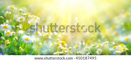 stock photo chamomile flowers field wide background in sun light summer daisies beautiful nature scene with 450187495 - Каталог — Фотообои «Природа, пейзаж»