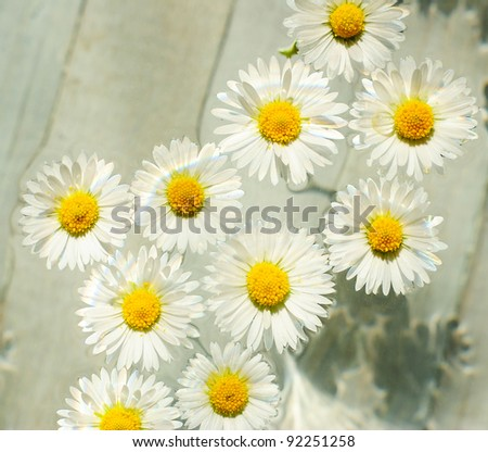 Chamomile flowers in bowl, top view