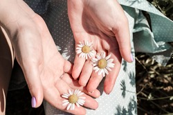 Chamomile flowers in the hand palms. Flower in the woman hand. Game of light and shadow of a flowers. Belarus, Minsk.