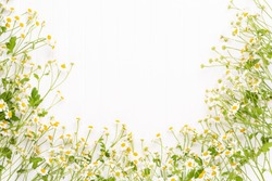 Chamomile flowers on white background. Flat lay.