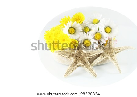 Chamomile flowers, sea stars and dandelion on the stone