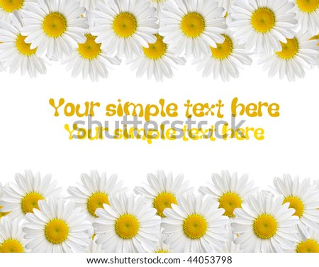 chamomile isolated on white background with with room for text
