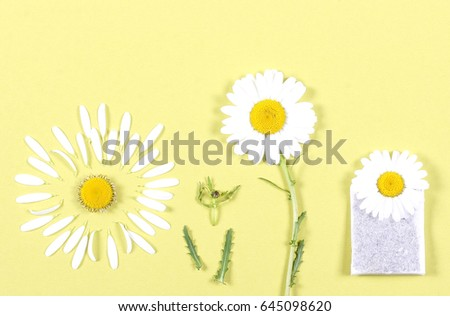 Chamomile plant lies on a bright background of petals lie separately #645098620