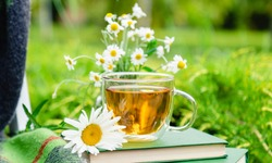 Chamomile tea. Glass cup of chamomile herbal tea with chamomile flower on books and warm plaid outdoor with nature background in garden. Romantic leisure breakfast, hot drink