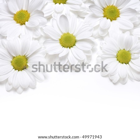 chamomiles background - stock photo
