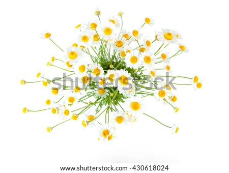 Chamomiles isolated on white background. - Shutterstock ID 430618024