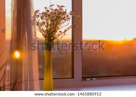 Chamomiles on the windowsill. Sunset