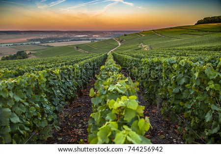 Champagne region in France. A beautiful view.