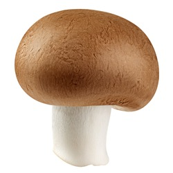 champignon, mushroom, isolated on white background, clipping path, full depth of field