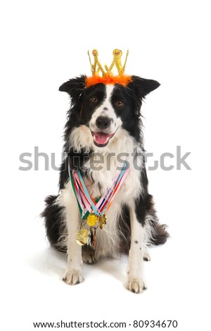 Champion dog with many medals and crown from the show