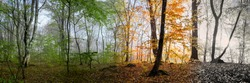 Change of four seasons in the forest panorama