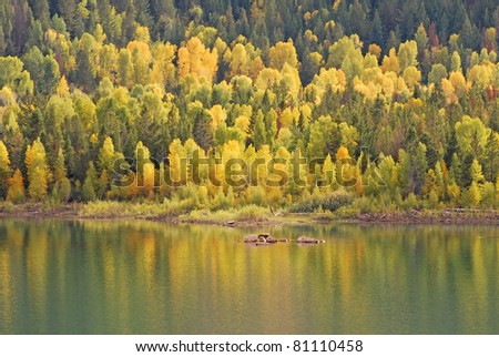 Changing aspen trees reflecting in a mountain lake in the fall.