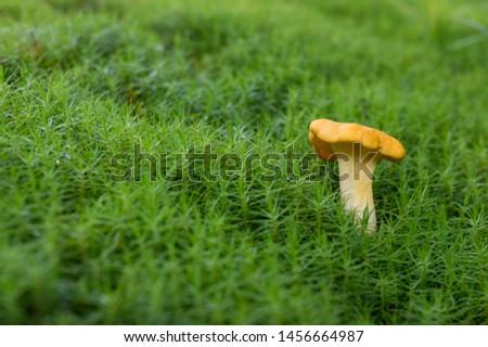 Chanterelle, Edible Mushroom, Food, Raw Food, Vegetable