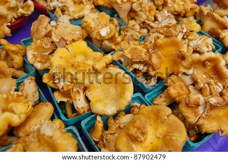 Chanterelle Mushrooms at Farmer's Market