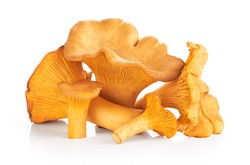 Chanterelle mushrooms isolated on a white background. Close up.