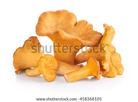 chanterelle mushrooms isolated...