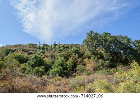 Shutterstock Chaparral and brush cover dry summer hills