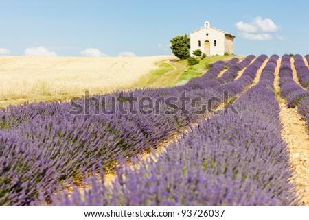 chapel with lavender and grain fields, Plateau de Valensole, Provence, France