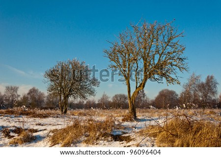Characteristic trees in the Dutch nature reserve Dintelse Gorzen (near the village of Steenbergen, North-Brabant).