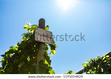 Chardonnay wine grape variety sign on wooden pole against blue sky during sunny day, vineyard varieties signs, Okanagan valley British Columbia Canada