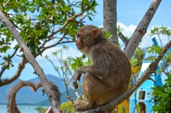Charismatic monkeys.Island of monkeys.Vietnam. North Islands