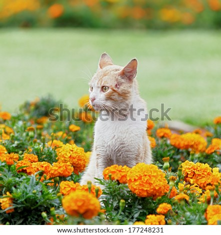 Charming cat among the flowers in the city park of the city of Lima, Peru