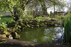Charming garden pond, lined with moss-covered stones, wood and bushes. Pond equipped with water iris. In background garden sitting. Small natural garden lake in the spring.