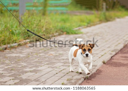 charming puppy for a walk in the city park #1188063565