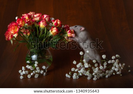 Charming rat on its hind legs sniffs flowers. Brown background. Festive picture. Flowers for loved ones.